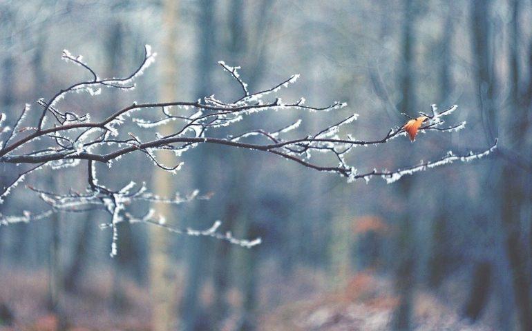 Ломоносовский район мокрый снег